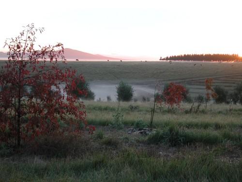 Morning Mist at The Farm