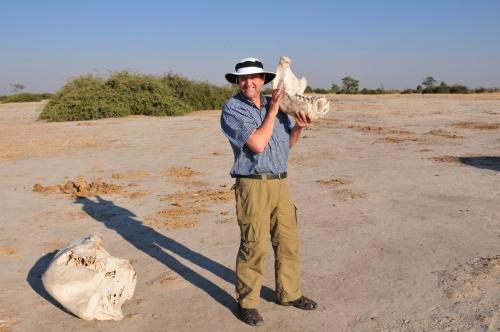 elephant jawbone.  Watch out for black mambas.